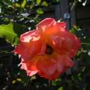 Garten Impressionen