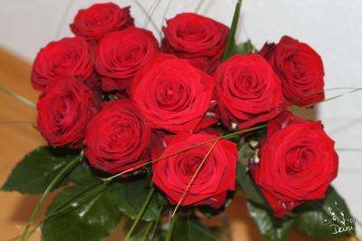 11 rote Rosen